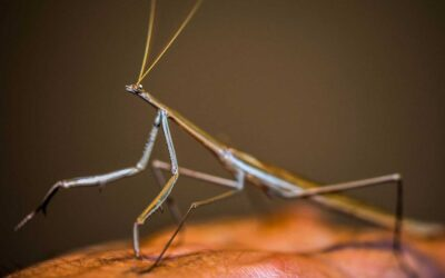 Do Stick Insects Need a Heat Lamp?