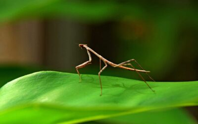 Do Stick Insects Jump?