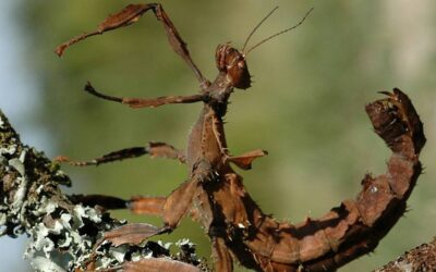 How Do Stick Insects Protect Themselves?