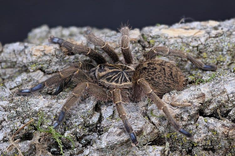 Do Tarantulas Sleep?