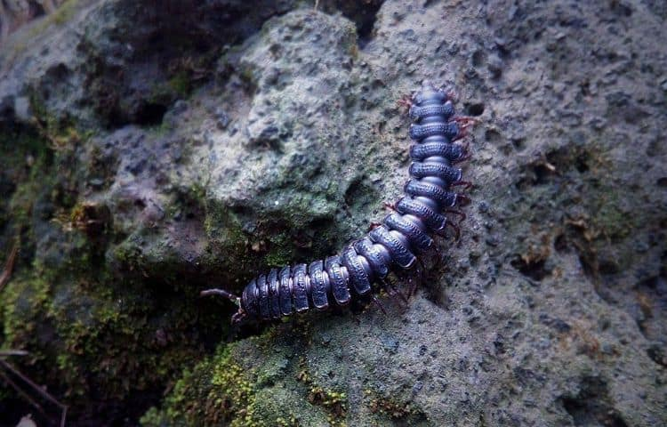 How to Make Millipede Substrate