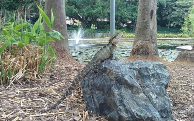 What Do Water Dragons Eat?