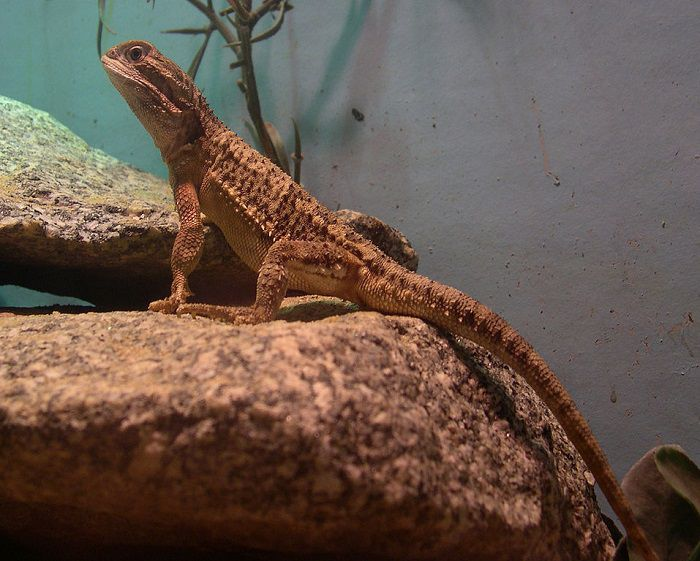 Why is My Lizard Not Eating?
