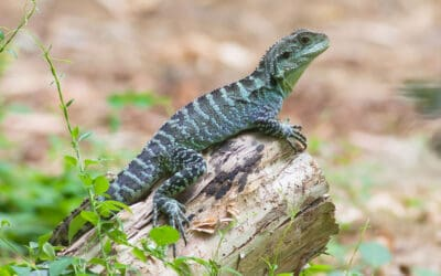 Do Water Dragons Interact with Humans?