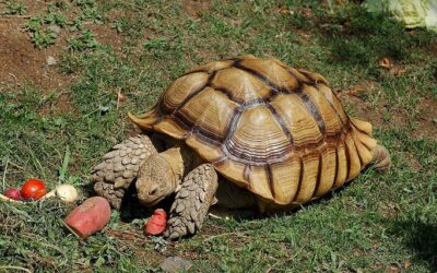 Why is My Tortoise Not Moving?