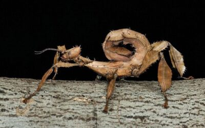 Are Stick Insects Cannibalistic?