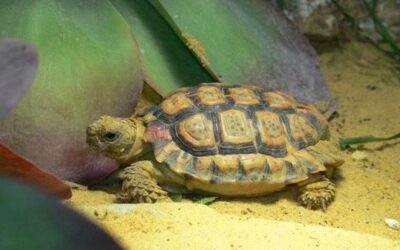 My Tortoise Keeps Trying to Climb the Walls