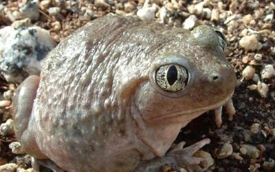 My Toad Is Not Moving – Is It Time to Panic?