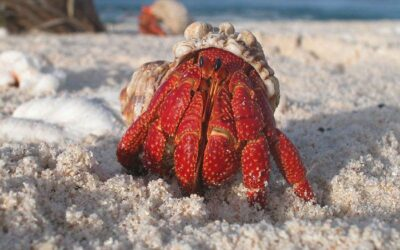 Why is My Hermit Crab Hiding?